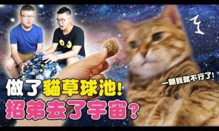 【黃阿瑪】招弟生日X貓大麻球池 貓皇們的反應是?