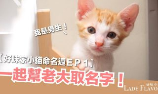 【好味小姐】徵小貓名 老大是溫柔穩重男喔!