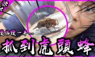 【胡子Huzi】開箱粉絲信件小插曲⋯⋯竟遇野生虎頭蜂!