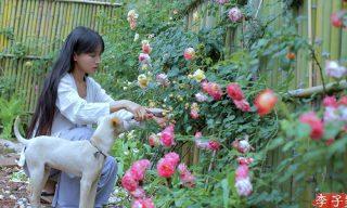【李子柒 Liziqi】 筍季來臨!鮮採嫩筍炒菜、燉湯用途多