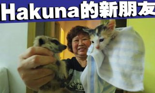 【Ahya阿亞】主人倒地不起、壞人闖屋 寵物會有什麼反應?