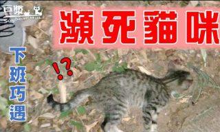 【豆漿 – Soybean Milk】路邊發現命危小貓 成功救回一命讓網友感觸良多