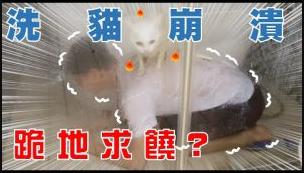 【豆漿 – Soybean Milk】一次洗兩隻貓!豆漿與俊榮一起吃飯了?