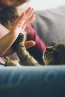 #對岸用語#寵物溝通#學歷重要嗎? | Dcard熱門事件
