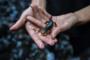日本人令人不敢恭維的獵奇商品:國寶大山椒魚造型蒟蒻  | Facebook熱門事件
