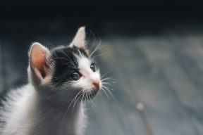 走私貓引激憤! 走私貓事件網路聲量一小時飆破萬則