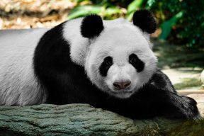 動物園喜訊不斷!這些人氣動物萌翻網友
