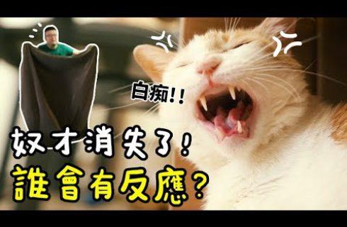 【黃阿瑪的後宮生活】主人不見了! 貓咪你會來找我嗎?