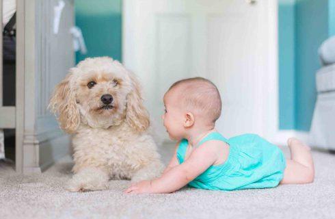 嬰幼兒用品口碑大調查 ─ 尿布口碑洞察與父親母親族群解析