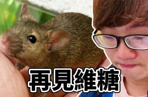 【VITO維特】寵物鼠離開人世 飼主一路陪伴到火化結束