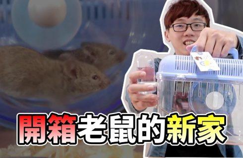 【VITO維特】養了衣櫃裡出現的鼠寶寶.老鼠新家開箱