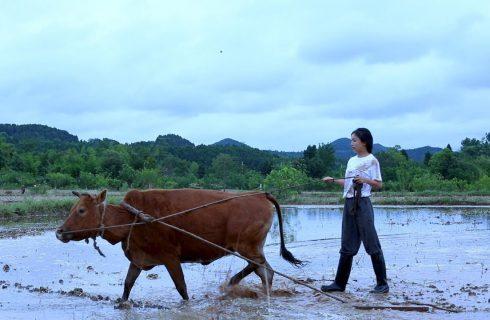 【李子柒 Liziqi 】採收麥子的時節到了!一起釀些不同文化發源的啤酒配小菜