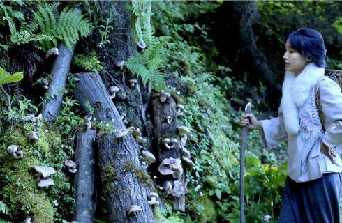 【李子柒 Liziqi】用菌絲在山中種香菇 在採收季節來上一桌的新鮮香菇料理