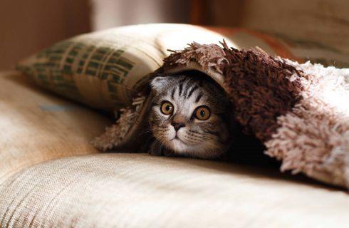 【熱門新聞】貓咪生命也同人類!新竹男虐貓引眾怒